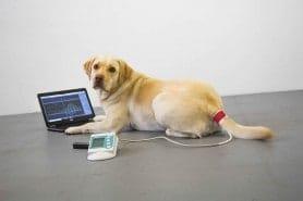 Blutdruckmessung- und Pulswellenanalyse mit HDO