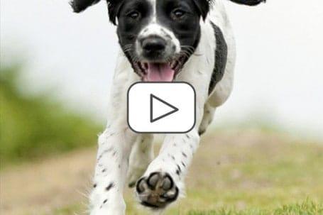 Sportmedizin Hund