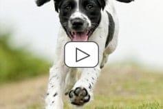 Canine Sports Medicine