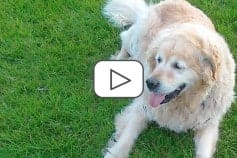 Ernährungsmanagement beim Hund