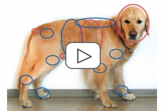 Companion Animal Pain Management: Introductory 1 Hour Module