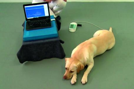 Blood pressure measurement (BPM, HDO)and pulse wave analysis